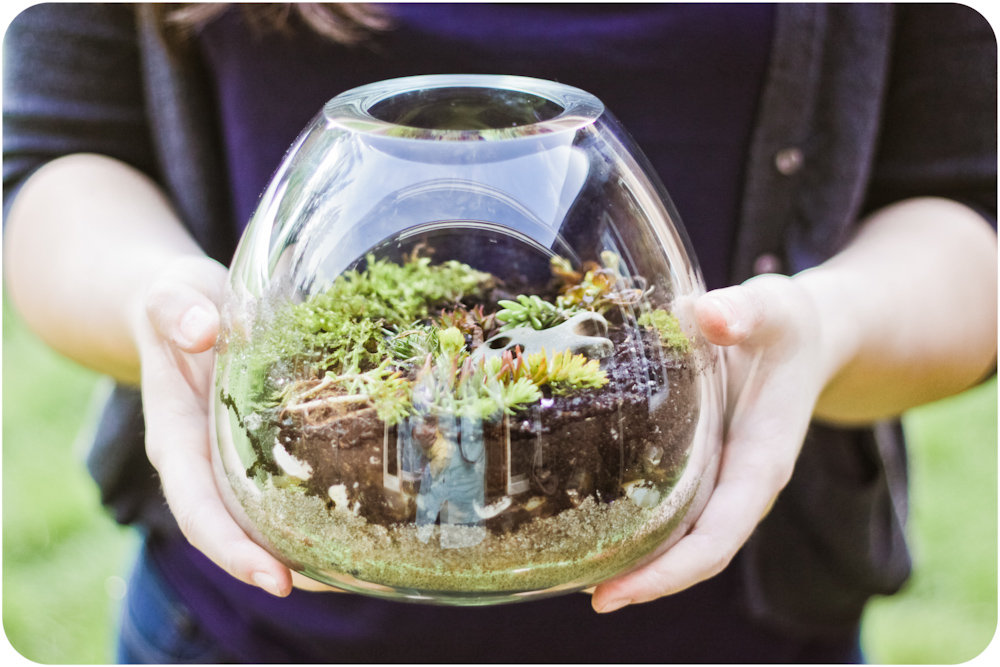 Build-Your-Own-Terrarium